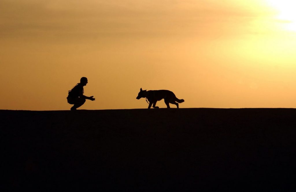 Reprise des cours  canins le samedi 5 décembre 2020.